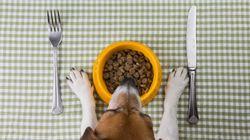 Γνωρίστε τα: 3 Super Foods που μπορείτε να μοιραστείτε άφοβα με το σκύλο