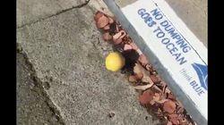 굴러가는 레몬을 찍은 영상이 엄청난 조회수를