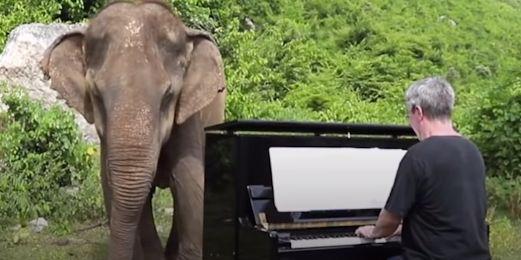 Ce pianiste fait danser les éléphants blessés sur des musiques de Chopin et de