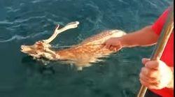 Εύβοια: Ψαράς βγήκε για ψάρεμα και έπιασε ζωντανό