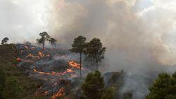 Feux de forêts: 313 hectares détruits en une semaine