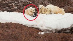지금 북극에선 아기 북극곰이 플라스틱을 물어뜯고