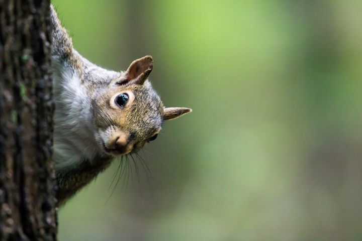 Squirrels can do no wrong.