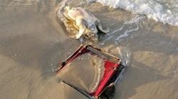 Tragic Photos Of Sea Turtle Stuck In Beach Chair Are A Reminder To Pick Up Your