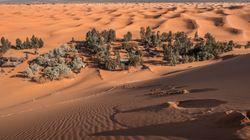 BMS : Vague de chaleur sur les régions des oasis jusqu'à