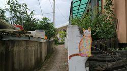 춘천에는 길고양이들과 함께 사는 마을이