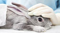 US-Forscher haben Methode entwickelt, die Tierversuche überflüssig