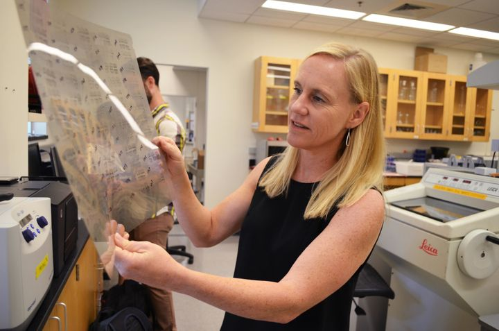 North Carolina State University Professor Heather Patisaul studies how exposures to hormone-mimicking chemicals such as BPA c