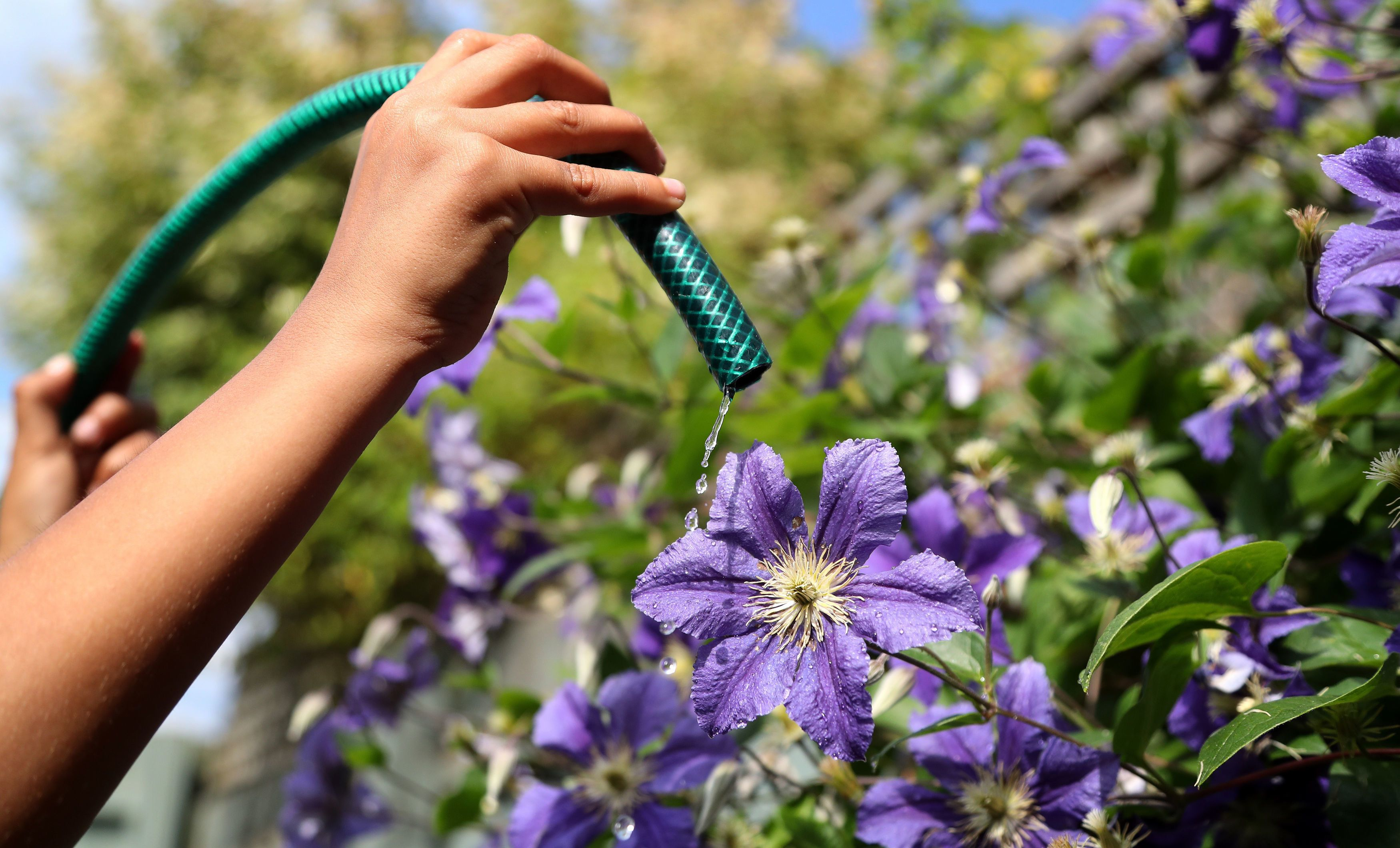 Heatwave Sees First Hosepipe Ban Imposed In England Since