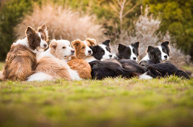 Ces photos de chiens primées vont illuminer votre
