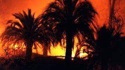 Incendie à Tata: le ministère lance un programme de reconstitution des 80 hectares ravagés par les