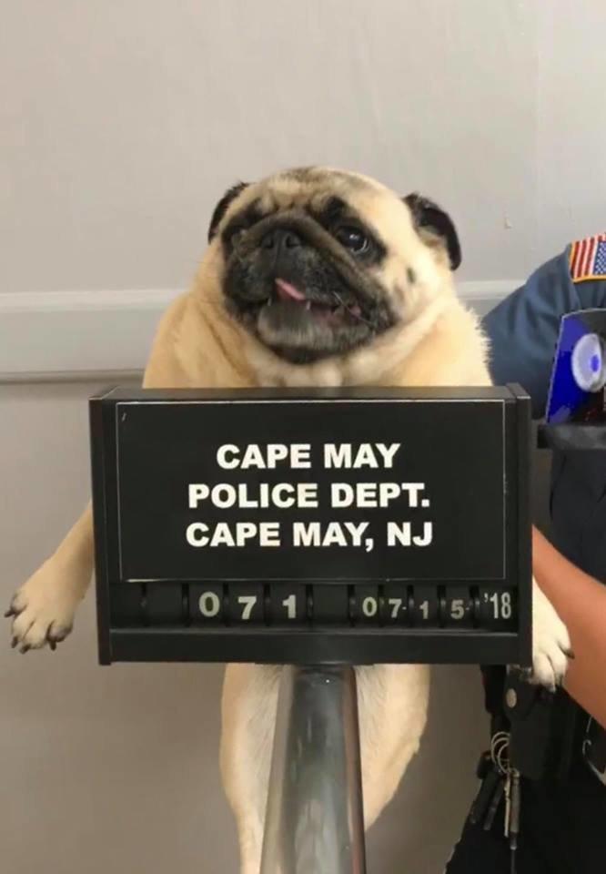 이 강아지가 구치소에 구금된