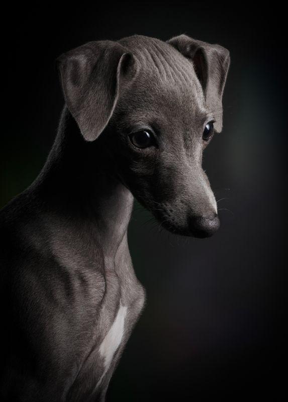'강아지' 부문 1위