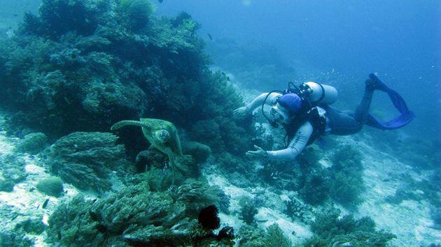 필리핀에서 다이빙 중 바다거북을 만난