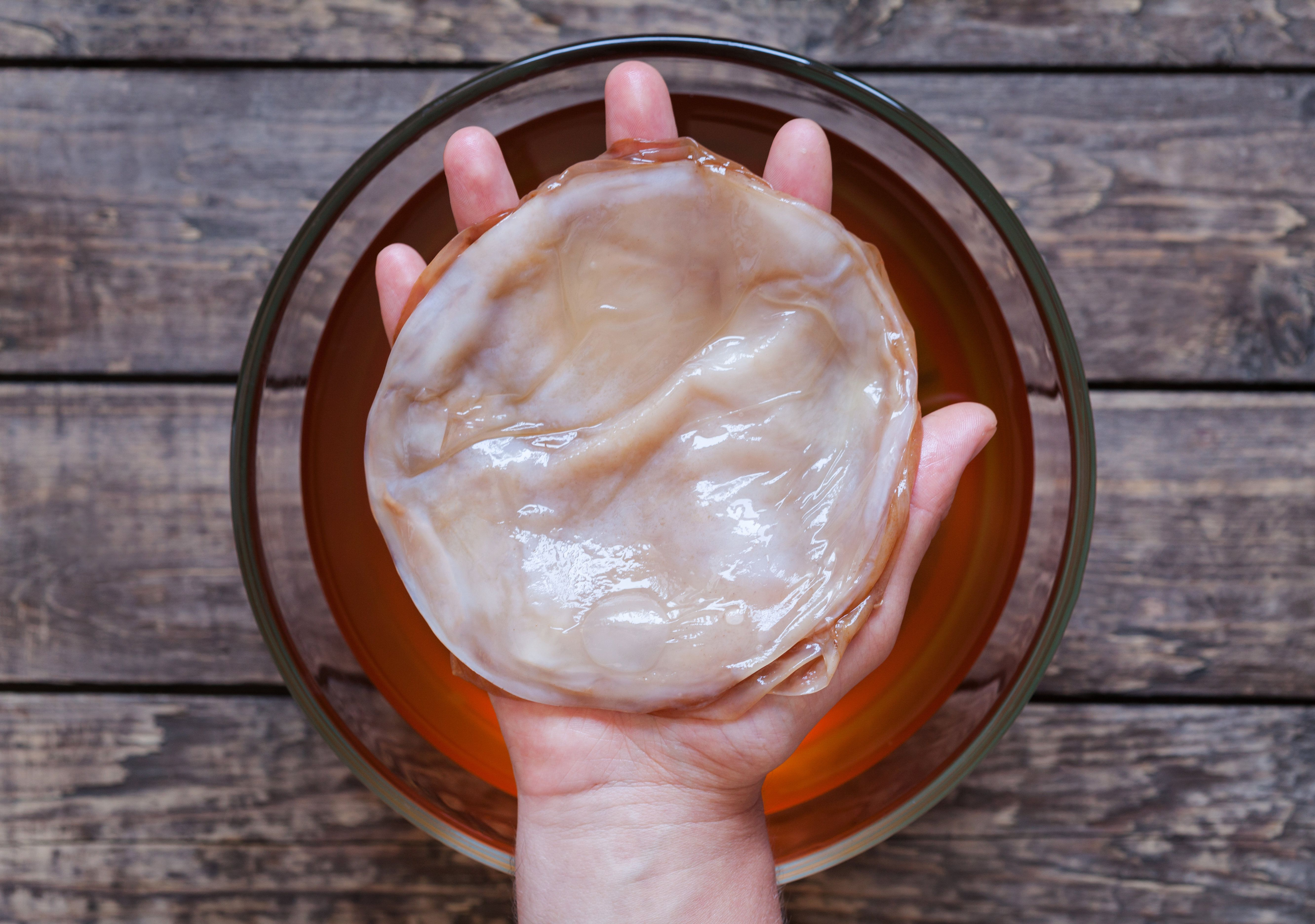 The scoby -- symbiotic cultures of bacteria and yeast -- infuses kombucha with yeast and beneficial bacteria&n