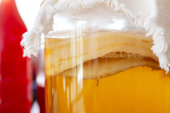 A closer look at the scoby.