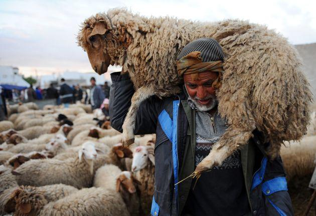 Mouton de l'Aïd: Combien vous coûtera-t-il cette
