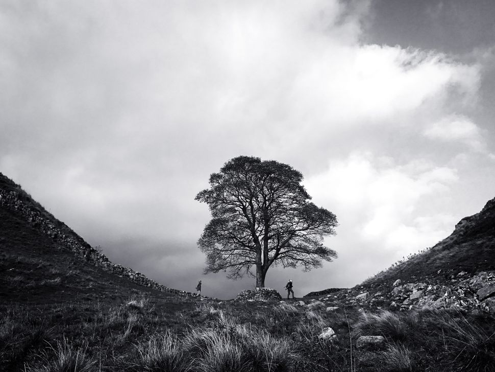"Second Place<br>""At Sycamore Gap""<br>Northumberland, U.K.<br>Shot on iPhone 7"