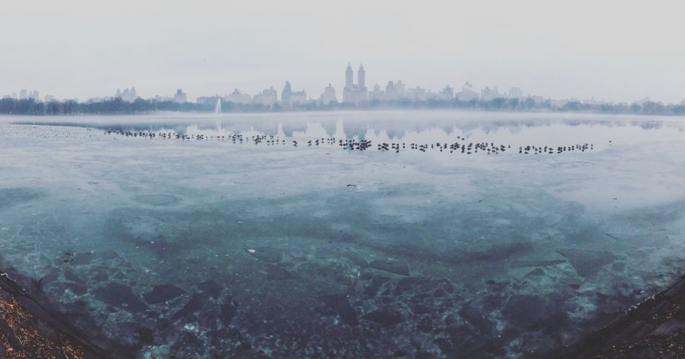 "Second Place<br>""Frozen Central Park""<br>Central Park, New York City<br>Shot on iPhone 7"