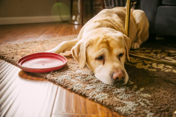 Grieving pets can lose their appetite, and their energy level can drop.