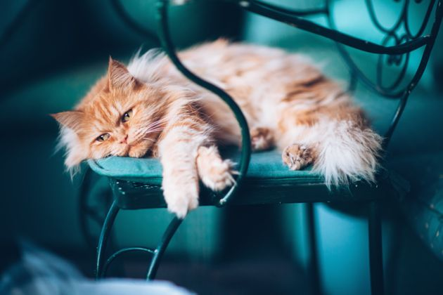 """Cat therapist Carole Wilbourn said of grieving felines, """"They can withdraw, they can take it out..."""