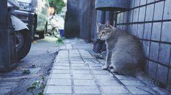 감촉 좋은 열쇠고리, 알고 보니 '고양이