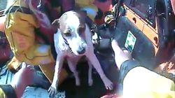 Kleiner Hund stürzt von 50 Meter hoher Klippe – zum Glück sind unten zwei