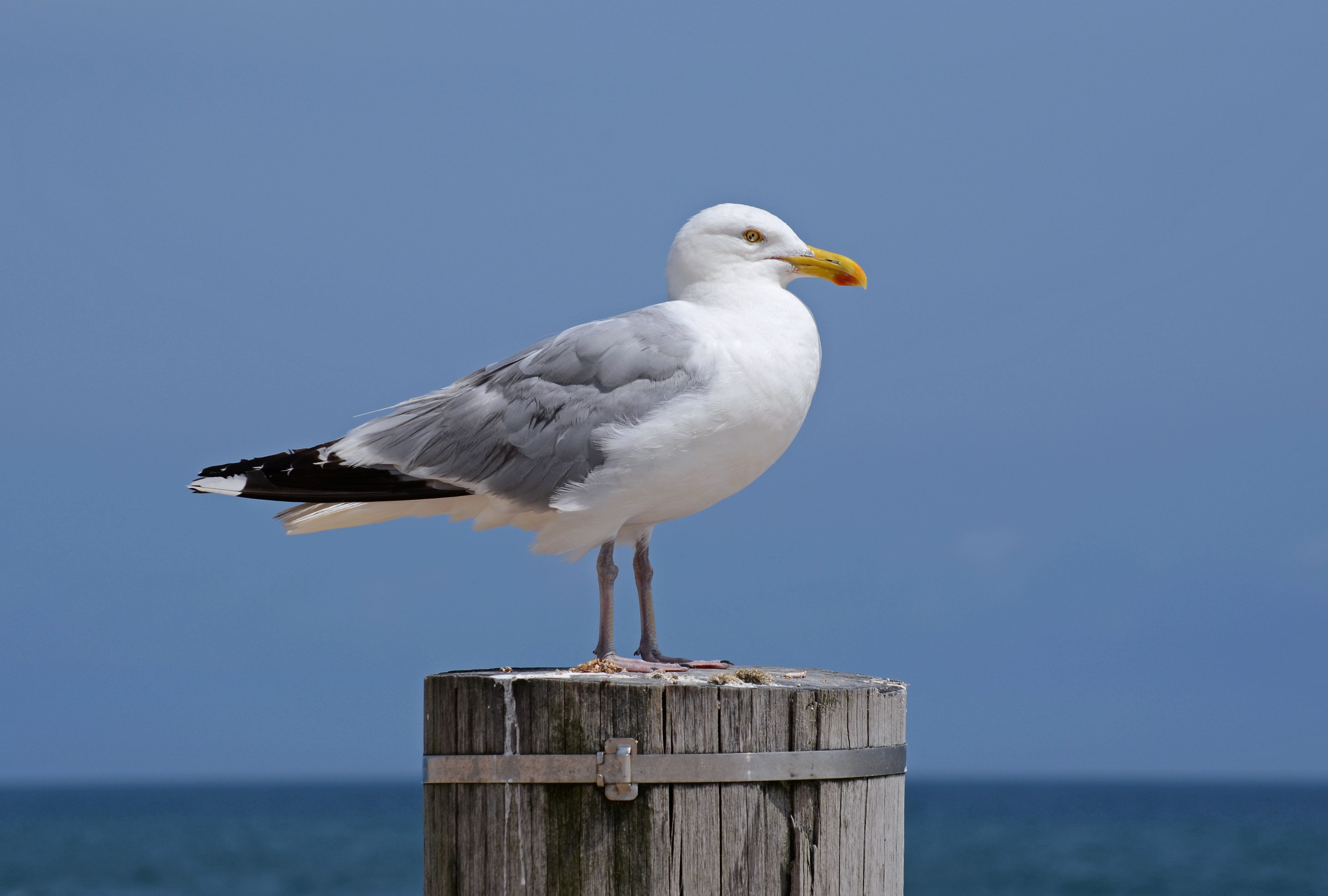 Seagull Dies After Man Swings Bird Against Wall For Stealing A