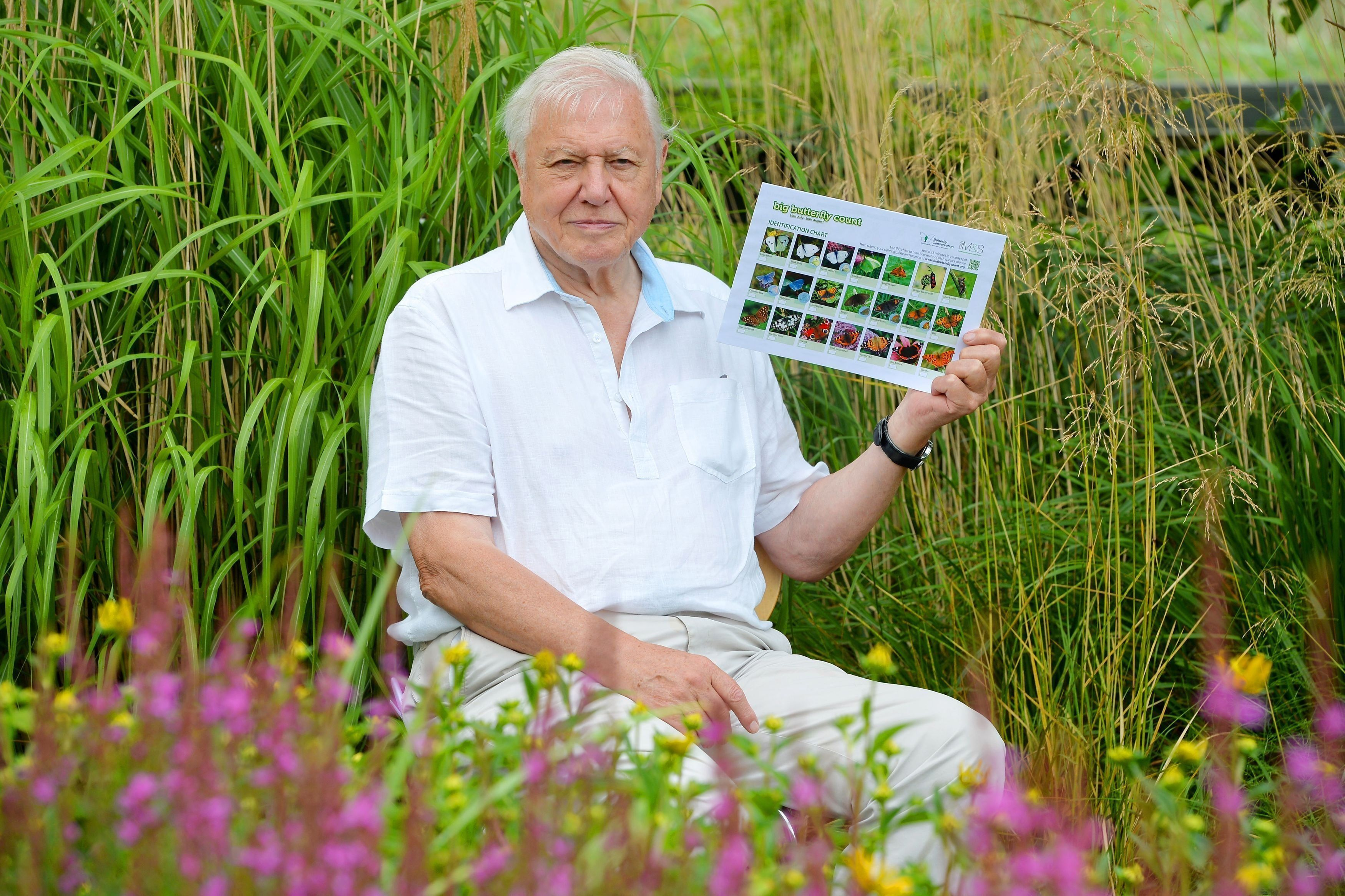 NATURE: Sir David Attenborough Wants You To Help Him Count
