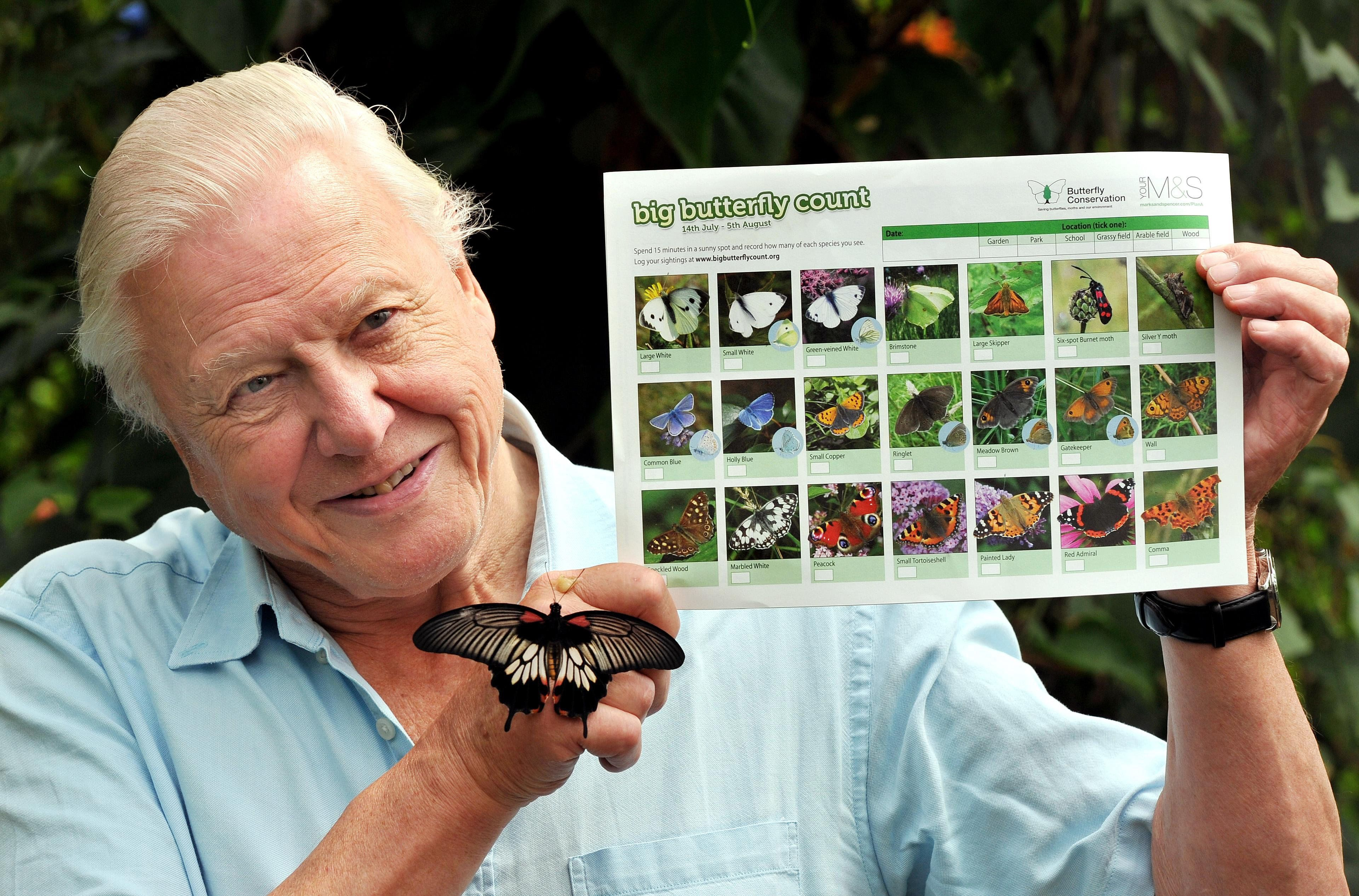 David Attenborough backs world's biggest butterfly count