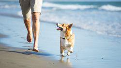 Quand on interdit les animaux sur les plages tunisiennes et on menace de les