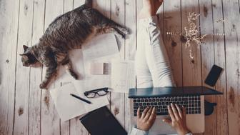 Creative workspace: girl working with her cute grey cat.