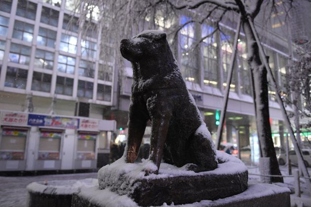 The Hachikō statue outside Shibuya Station in Tokyo.He left his house to greet his owner atthe...