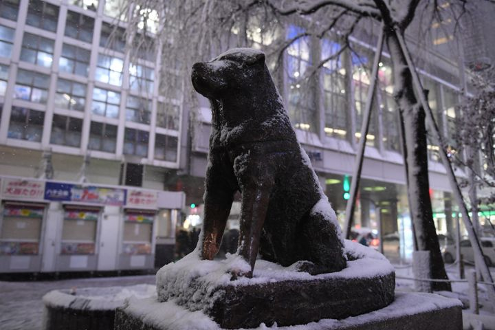 The Hachikō statue outside Shibuya Station in Tokyo. He left his house to greet his owner at the station every evening and continued to do so for nearly a decade after the man died.