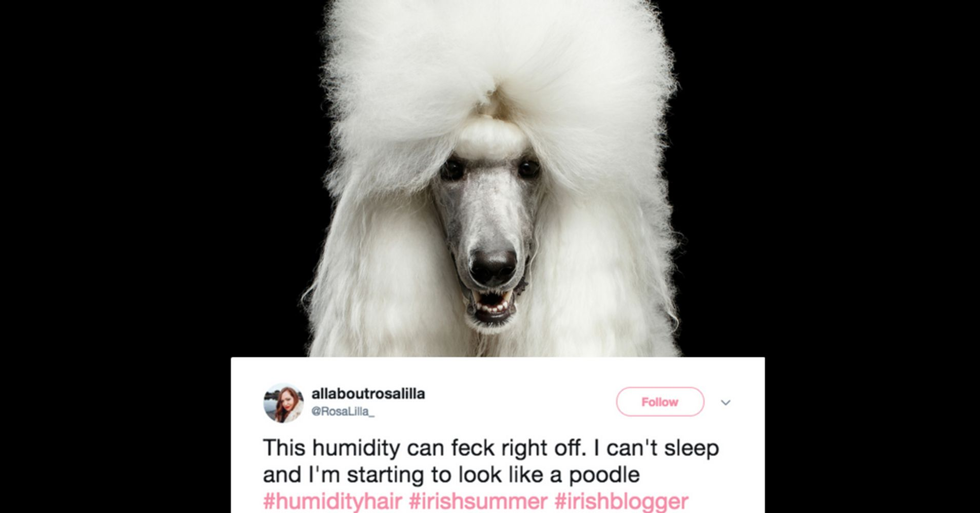 18 Hilarious Tweets About The Epic Battle Between Hair And Humidity