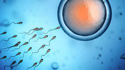 남성 정자 특이 단백질을 국내 연구진이