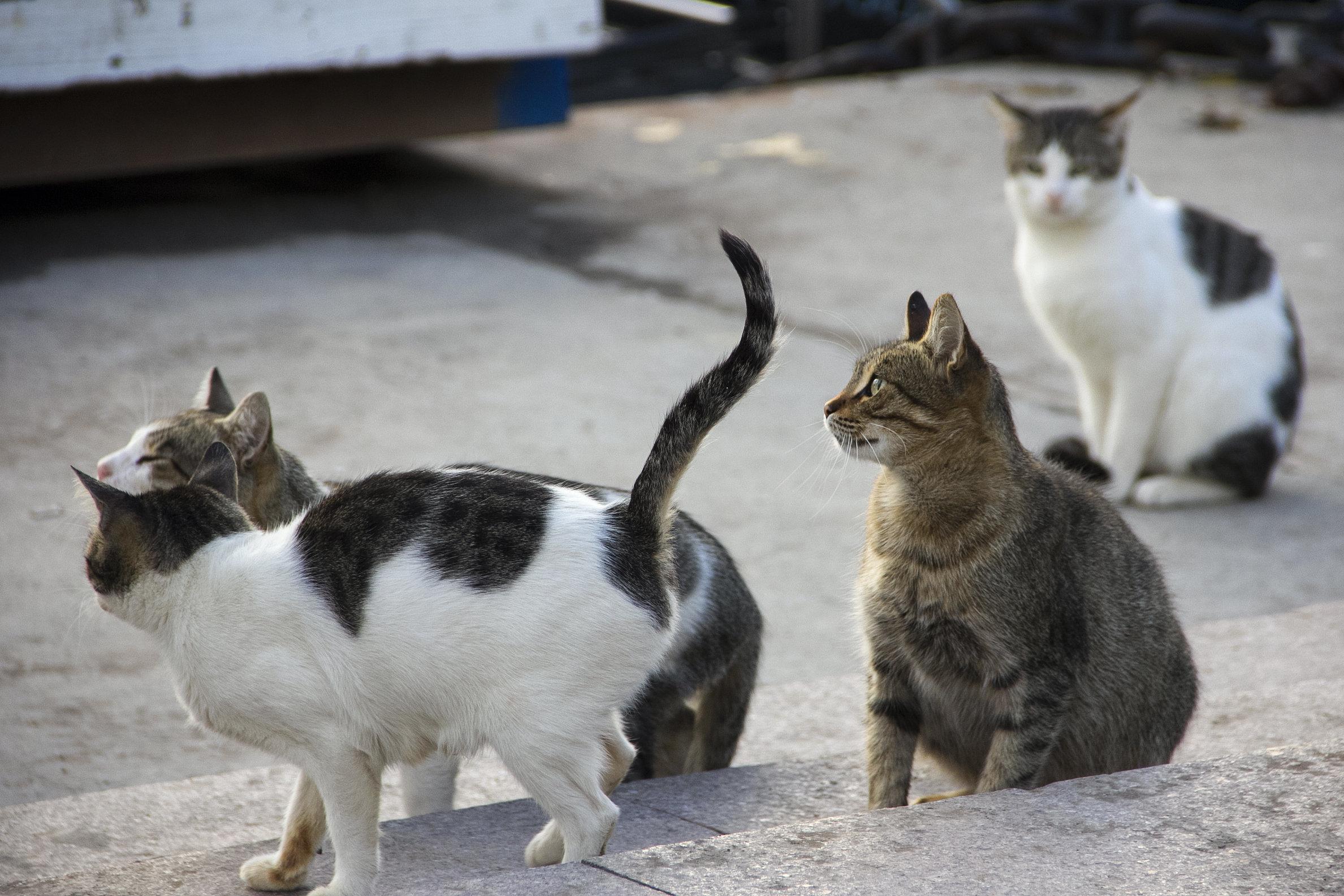 워싱턴 DC가 세계 최초로 한 도시 고양이 숫자 전부 세기로 한