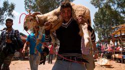 Aïd Al Adha: 3,7 millions d'ovins et de caprins identifiés par