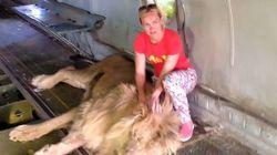 Ρωσίδα πάει να βγάλει selfie με λιοντάρι. Την δαγκώνει και αρχίζει να την σέρνει σαν πάνινη κούκλα
