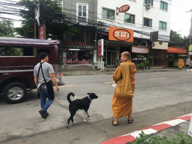 아침 탁발 중인 승려를 따라다니는 치앙마이 거리의