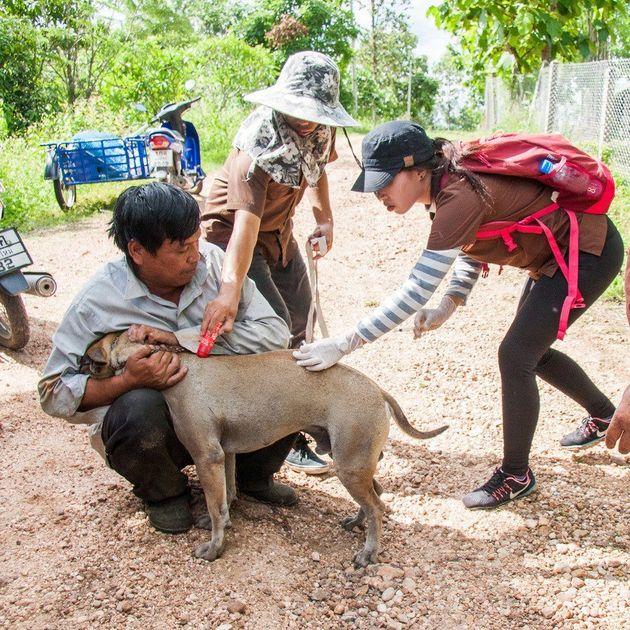 타이 북부 치앙마이에서 동물보호단체 활동가와 수의사들이 거리의 개에게 광견병 백신 주사를 놓고 있다. 광견병 확산 우려가 높아진 가운데 영국의 동물보호단체 '세계동물서비스...
