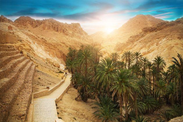 Après des décennies de sécheresse.. L'eau pourrait jaillir de nouveau dans la vieille oasis de
