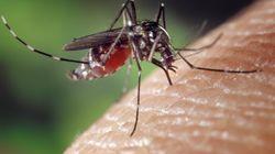 Le moustique tigre signalé dans quatre