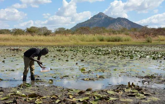 Patrick collecting water samples at the edges of the Chitete reservoir,