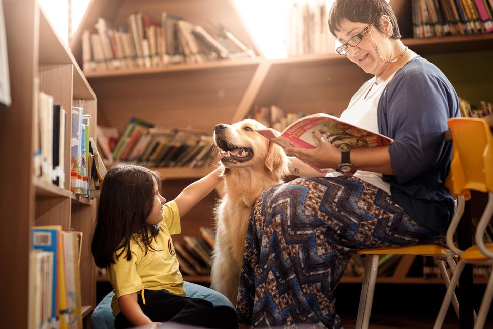 "<strong>Second Place</strong><br>""The Magic of Reading""<br>Messi, golden retriever, Brazil"