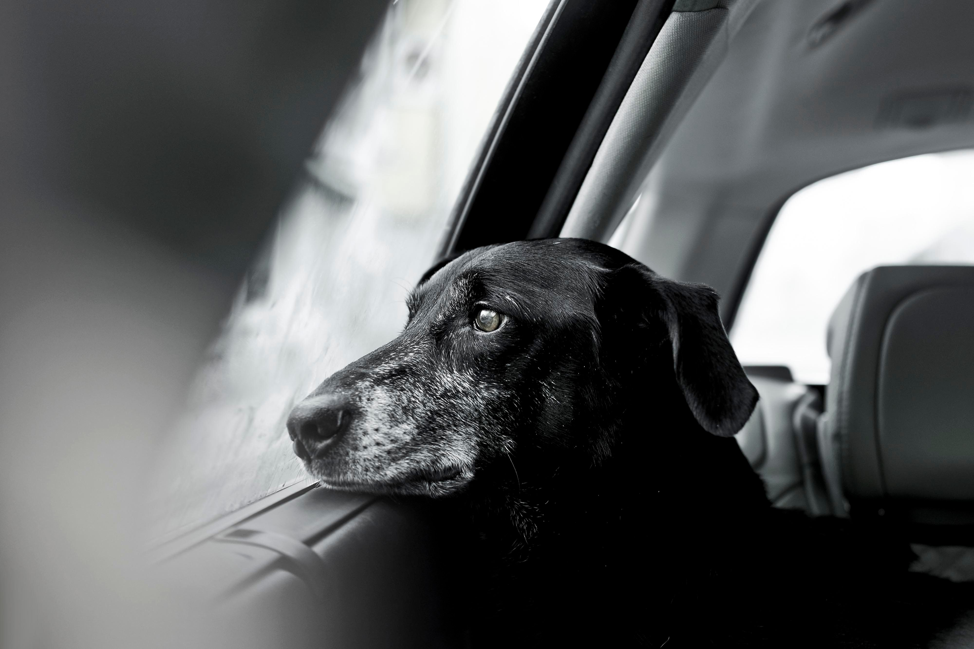 These Winning Images From Dog Photographer Of The Year Are Comfort For The