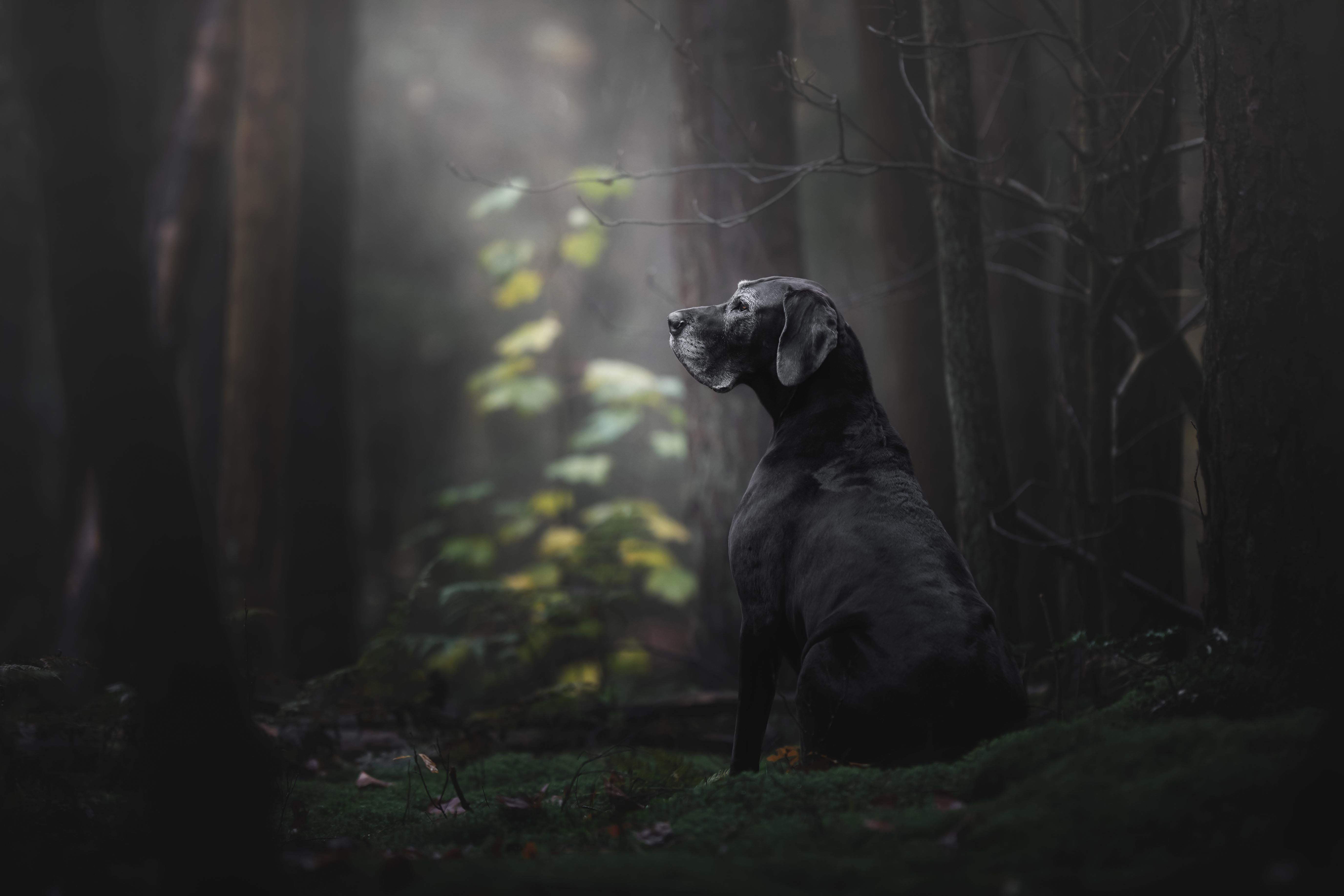 "<strong>First Place and Overall Winner</strong><br>""The Lady of the Mystery Forest""<br>Noa, Great Dane, Netherlands"