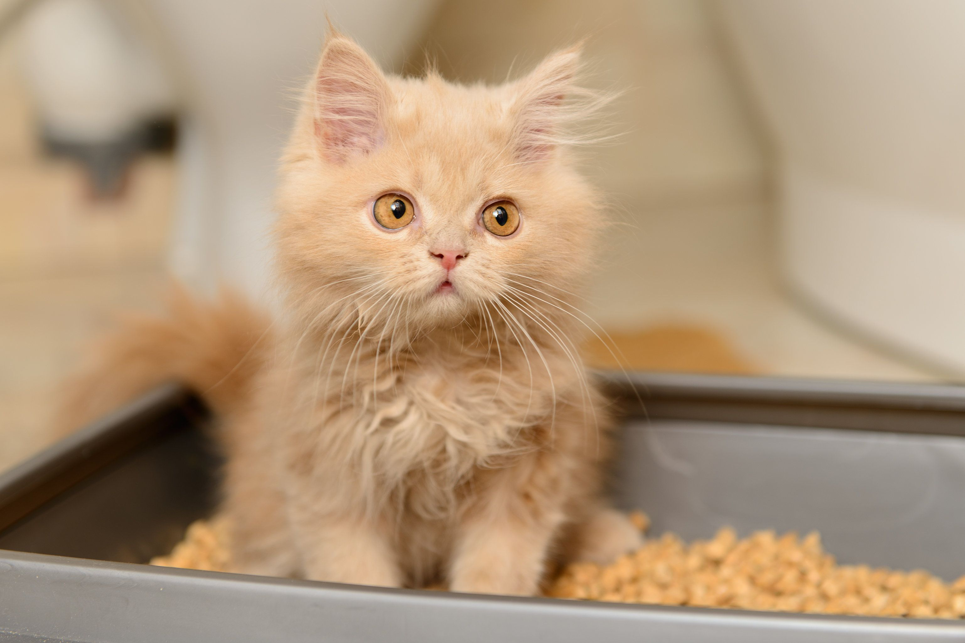 What Is Toxoplasmosis? Parasite In Litter Trays Could Help You Become A Business Fat