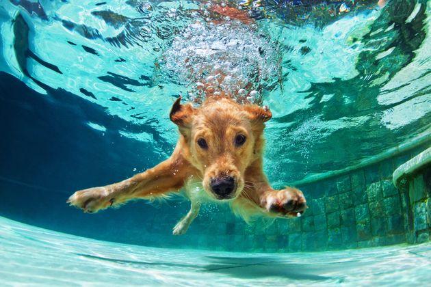 Καλοκαιρινές διακοπές με το σκύλο σας: είστε