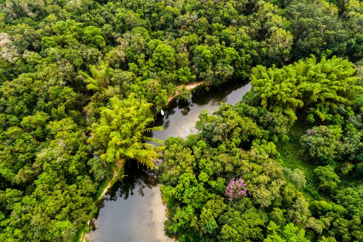 A power vacuum in Colombia has left previously inaccessible areas of the Amazon rainforest vulnerable to deforestat